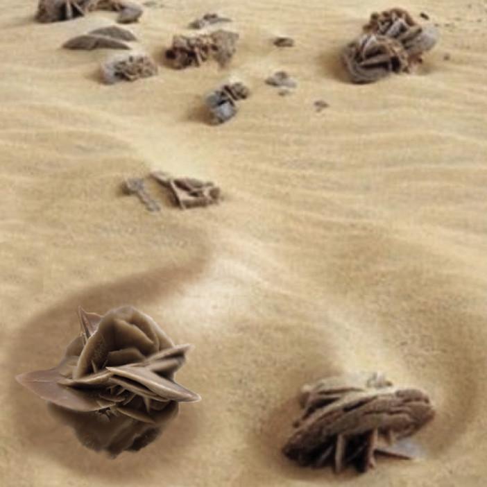 1-Desert-Rose.jpg